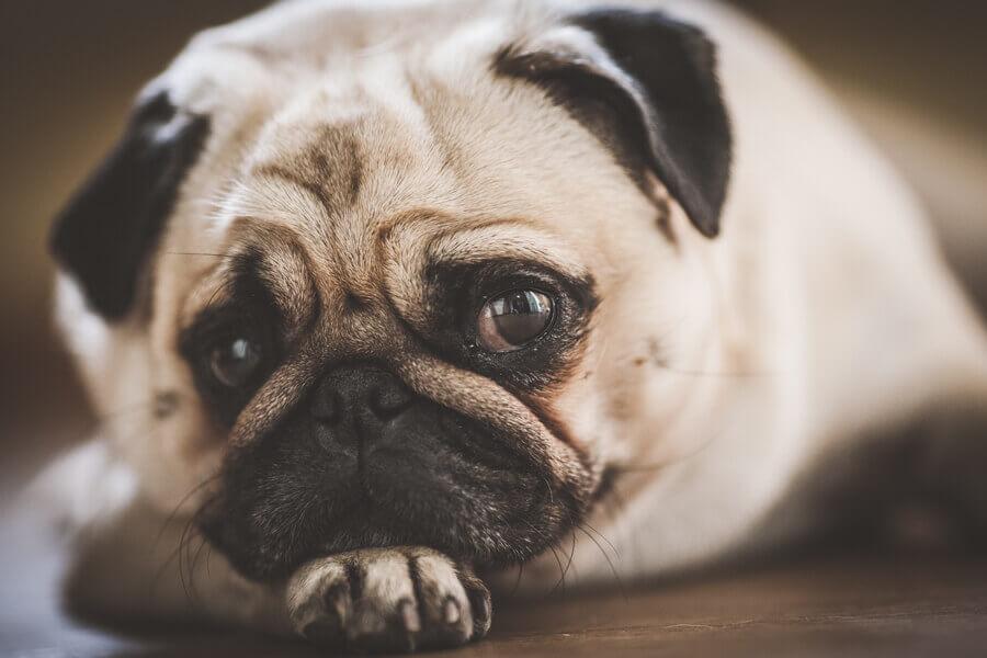 【注意点②】腎臓病・心臓病の犬には与えないように