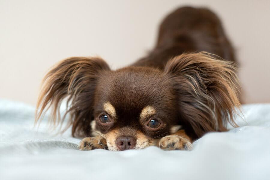 キウイは犬に与えてもOK!ただし愛犬に持病がある場合は慎重に