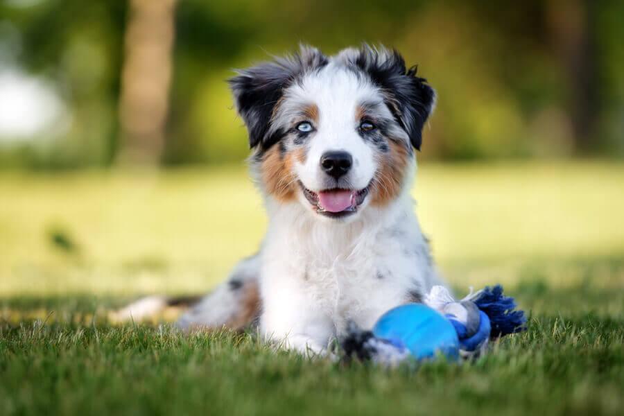 犬の膿皮症ってどんな病気?膿皮症の原因や症状、治療法・治療費・予防法について