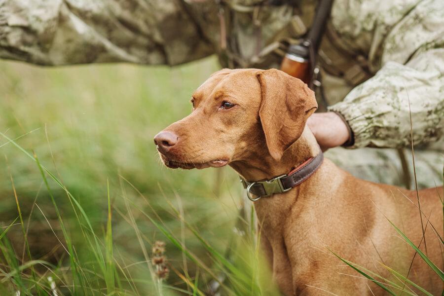 犬との信頼関係が重要!フィールドトライアルってどんな競技?