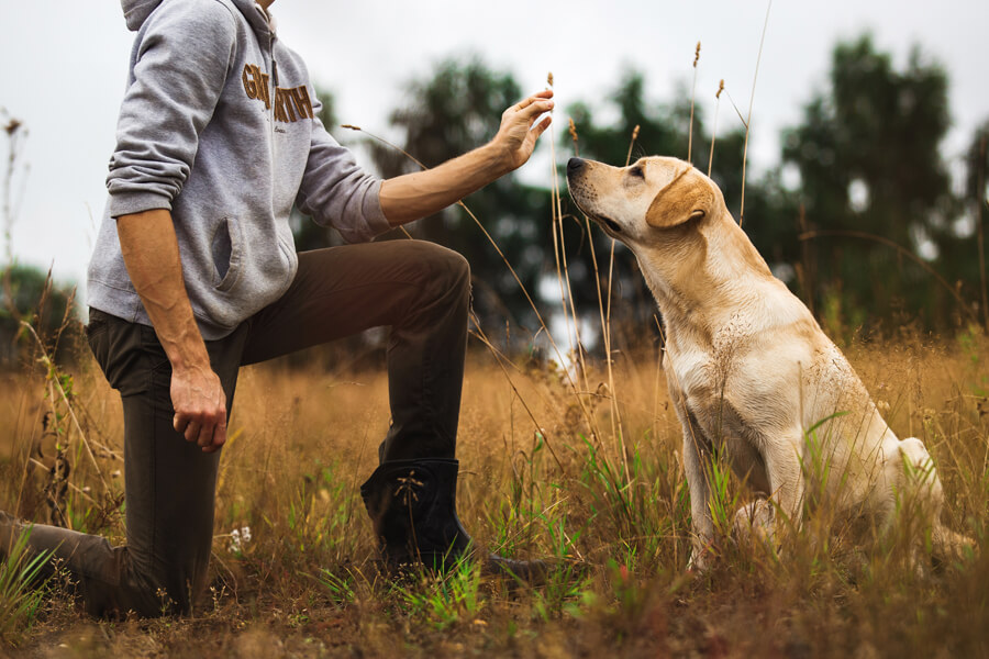 愛犬と一緒にフィールドトライアルを思う存分楽しもう