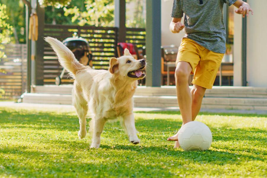 ゴールデンレトリバーは大型犬初心者にもおすすめ!