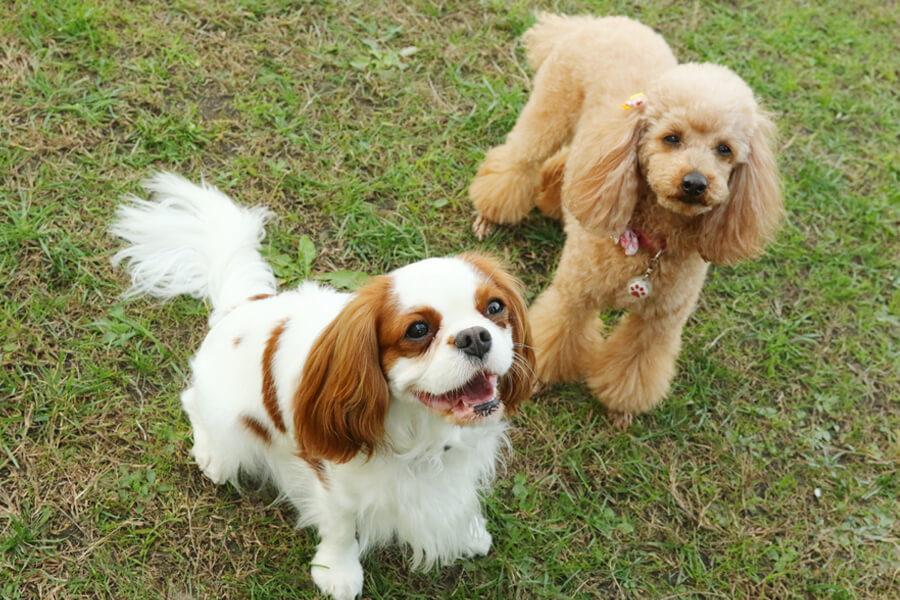 犬には2種類の被毛がある