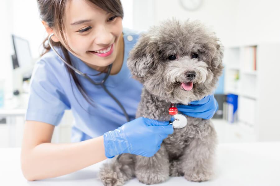 異変に気づいたら早めに動物病院を受診しよう