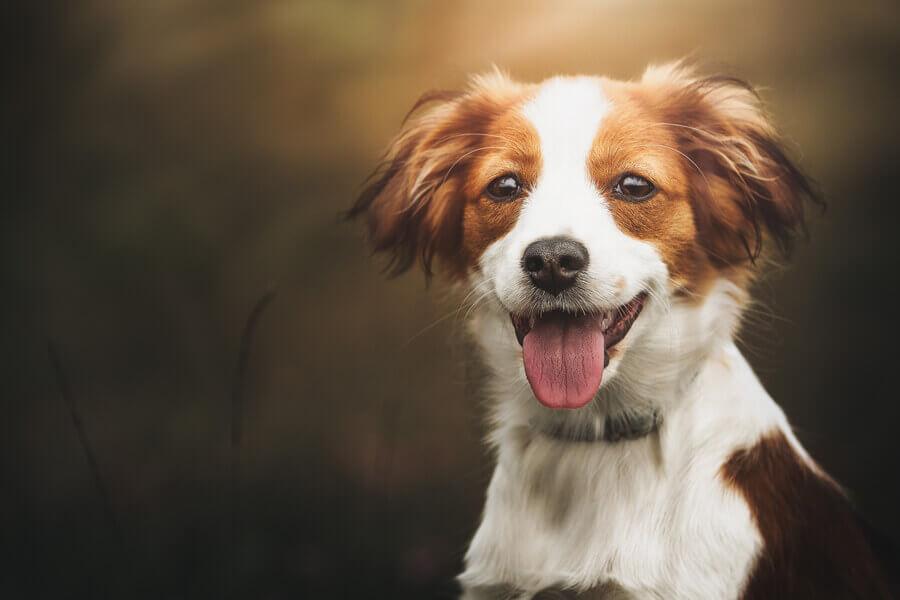 正しい知識を持って愛犬の命を守ろう